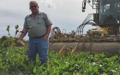 Sugarbeet harvest