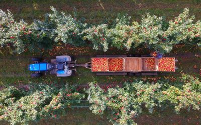 Farm work: Is it hard finding labor?
