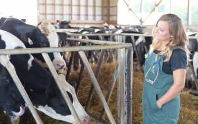 A technical-millennial veterinarian getting the job done